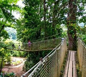Garden's Suspension Bridge  in the botanical garden
