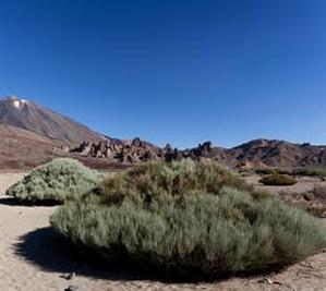 Snow-capped El Teide